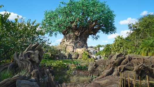 Disney's Animal Kingdom to test access to The Oasis before park opening