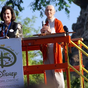 2 of 6: Disney's Animal Kingdom - Dr Jane Goodall at Animal Kingdom's 10th Anniversary.