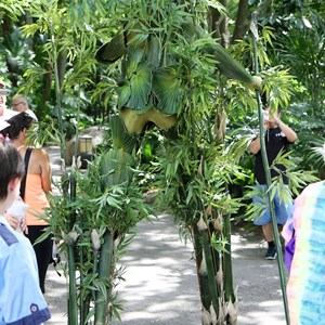 2 of 12: Bamboo - Bamboo at Disney's Animal Kingdom