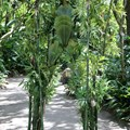 Bamboo - Bamboo at Disney's Animal Kingdom