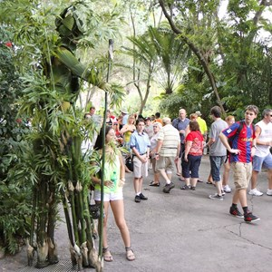 12 of 12: Bamboo - Bamboo at Disney's Animal Kingdom