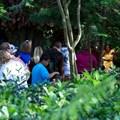 Camp Minnie-Mickey - Camp Minnie-Mickey - Pocahontas meet and greet