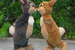Celebrate the 75th anniversary of Bambi with a Thumper and Miss Bunny meet and greet at Disney's Animal Kingdom