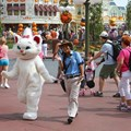 Character Meet and Greets at the Magic Kingdom - Marie at the Magic Kingdom