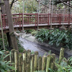 12 of 20: Cinderella Castle - Adventureland drained waterway at the tree house entrance