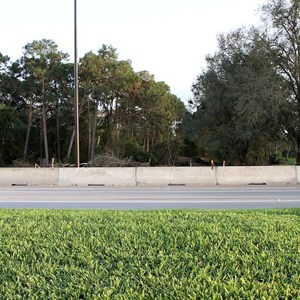 1 of 8: Disney's Hollywood Studios - Cleared area just outside the Studios entrance on E Buena Vista Drive