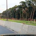 Disney&#39;s Hollywood Studios - The new lane area on on E Buena Vista Drive