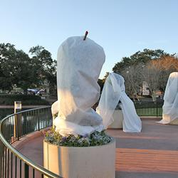 Horticulture team taking precautions against the cold weather at Epcot