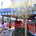 Fantasyland - The first Dumbo guests head into the queue