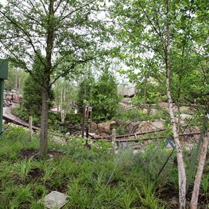 6 of 13: Fantasyland - Seven Dwarfs Mine Train coaster more walls down