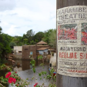 9 of 40: Festival of the Lion King - New Harambe Theatre area in Africa - Poster art