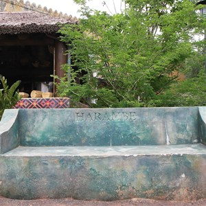14 of 40: Festival of the Lion King - New Harambe Theatre area in Africa - Harambe bench