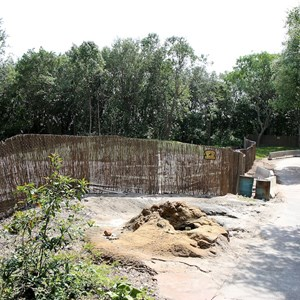 2 of 5: Kilimanjaro Safaris - Zebra area construction