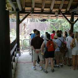 Changes to Kilimanjaro Safaris
