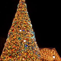 Lights of Winter display 2008