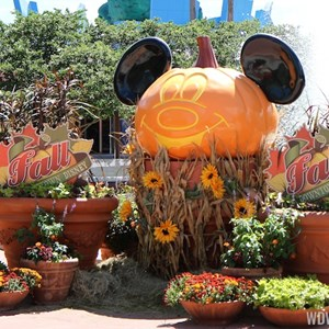 3 of 6: Marketplace - Downtown Disney Fall decor 2013 - Photo op near Planet Hollywood