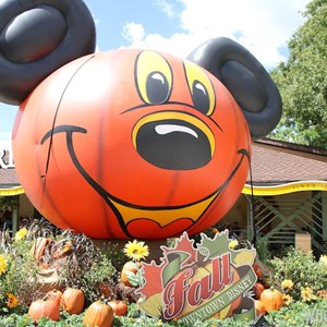 6 of 6: Marketplace - Downtown Disney Fall decor 2013 - Marketplace giant inflatable Mickey