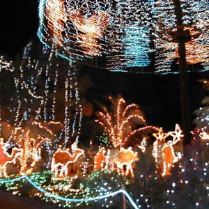5 of 15: Osborne Family Spectacle of Dancing Lights - Osborne Family Spectacle of Lights display on Residential Street