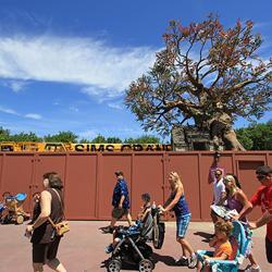 Pooh's Playful Spot tree removal