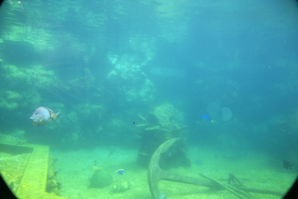 Shark Reef underwater viewing area