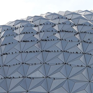 3 of 3: Spaceship Earth - OK it's birds, lots of birds.