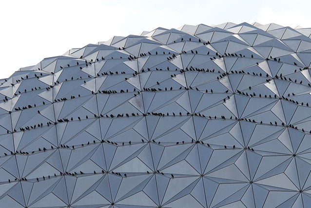 Spaceship Earth - OK it's birds, lots of birds.