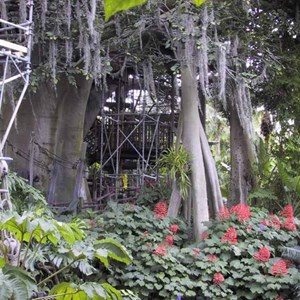 5 of 5: Swiss Family Treehouse - Swiss Family Treehouse refurbishment