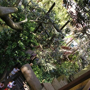 1 of 17: Swiss Family Treehouse - Inside the Swiss Family Treehouse and the view from the top