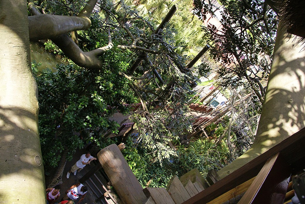 Inside the Swiss Family Treehouse and the view from the top