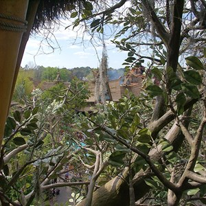 13 of 17: Swiss Family Treehouse - Inside the Swiss Family Treehouse and the view from the top