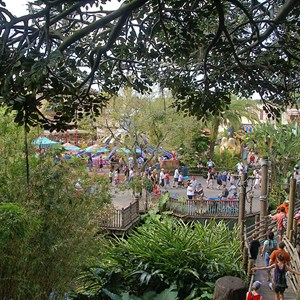 15 of 17: Swiss Family Treehouse - Inside the Swiss Family Treehouse and the view from the top
