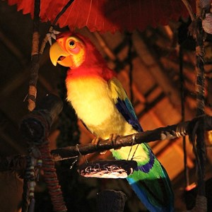 36 of 38: Walt Disney's Enchanted Tiki Room - Opening Day