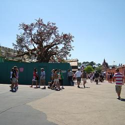 Pooh's Playful Spot tree relocated to The Many Adventures of Winnie the Pooh queue