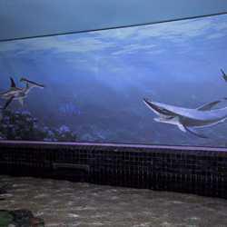 More Nemo