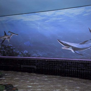 2 of 5: The Seas with Nemo and Friends (Pavilion) - More Nemo