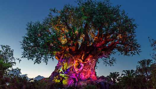 VIDEO - The Tree of Life Awakenings at Disney's Animal Kingdom