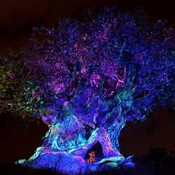 Tree of Life Awakens
