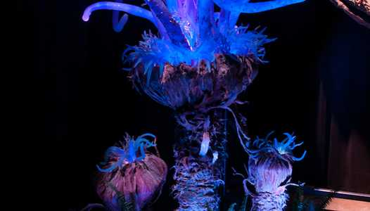 PHOTOS - Disney shares images of Pandora's bioluminescent flora