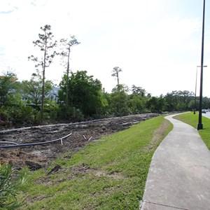 1 of 4: Disney Springs - Buena Vista Drive expansion road works
