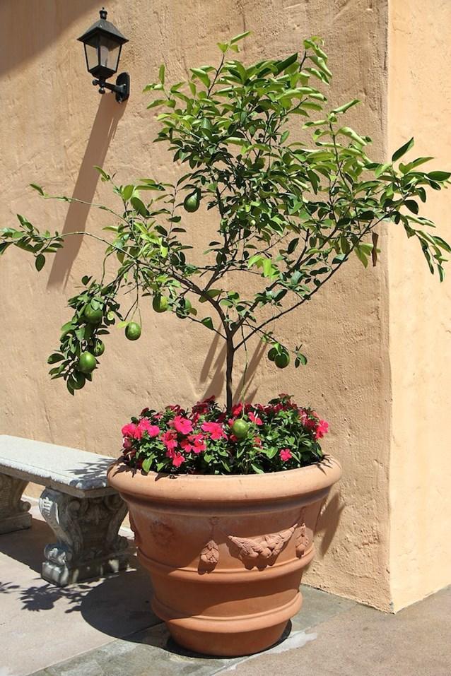 Via Napoli - Mini lemon trees in the courtyard