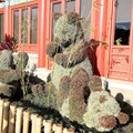 Epcot International Flower and Garden Festival - Panda topiary in China