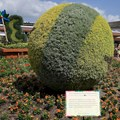 International Flower and Garden Festival - The Pixar Ball