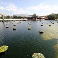 International Flower and Garden Festival - There are 240 of these floating gardens throughout the park