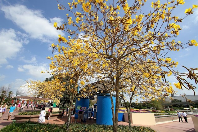International Flower and Garden Festival - Everything is blooming at Epcot