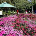 International Flower and Garden Festival - The Sounds of Nature Garden near to Test Track
