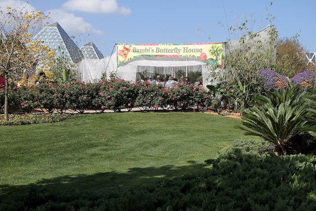 Epcot International Flower and Garden Festival - The all new expanded Bambi's Butterfly Garden
