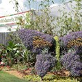 International Flower and Garden Festival - The butterfly garden entrance