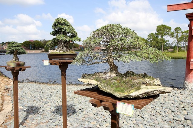 International Flower and Garden Festival - Bonsai Garden at the Japan pavilion
