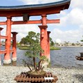 Epcot International Flower and Garden Festival - More of Japan's bonsai gardens