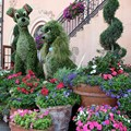 Epcot International Flower and Garden Festival - Lady and the Tramp topiary at Italy